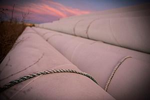 Pipeline_Andrew Burton/Getty
